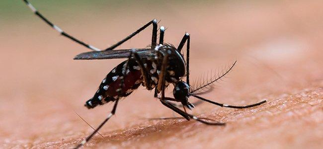 mosquito control company in Rockville
